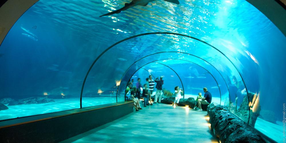 Роттердам: Океанариум зоопарка Блейдорп, Центр и Запад (Амстердам, Роттердам, Утрехт, Алмере), Нидерланды