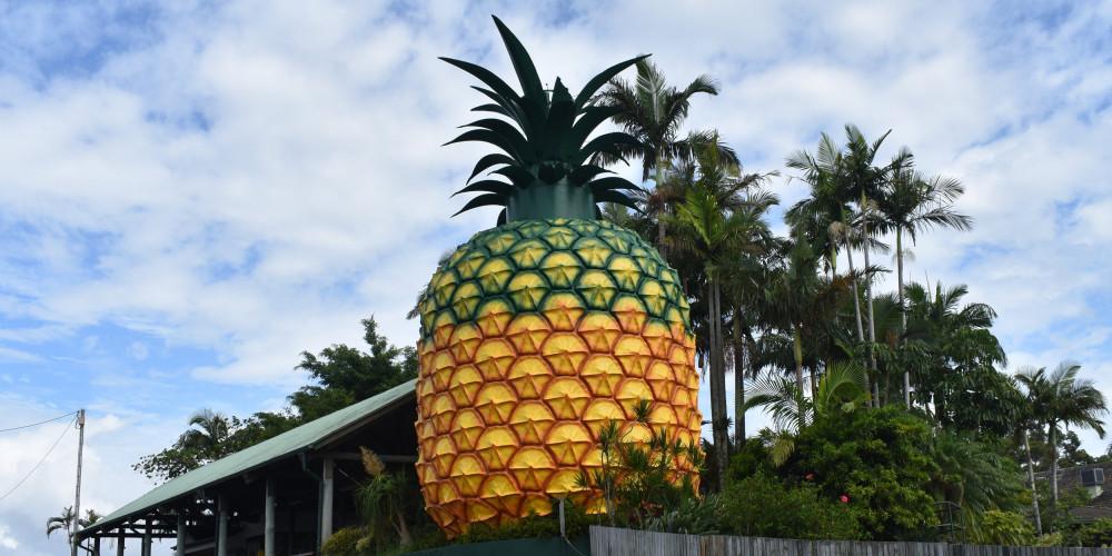Фото Квинсленд - Вумбай: Большой ананас, Юг (Брисбен, Рокхемптон, Тувумба), Австралия - Квинсленд