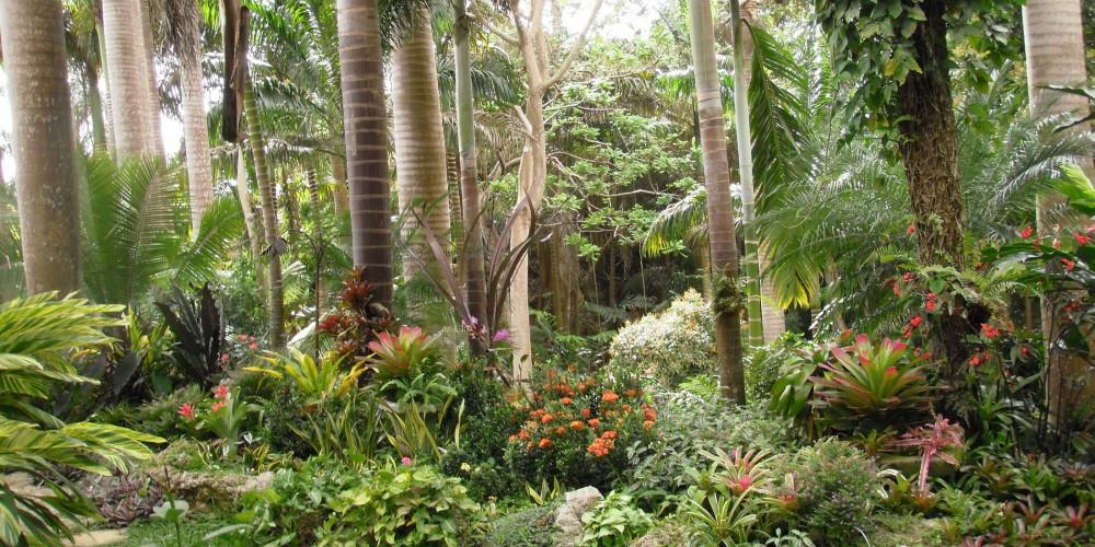 Фото Сент-Джозеф: Сады Ханта, Барбадос, Барбадос