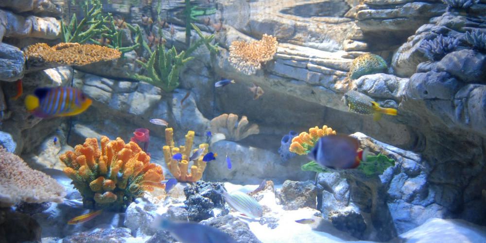 England - London: SEA LIFE London Aquarium, Большой Лондон, Великобритания - Англия