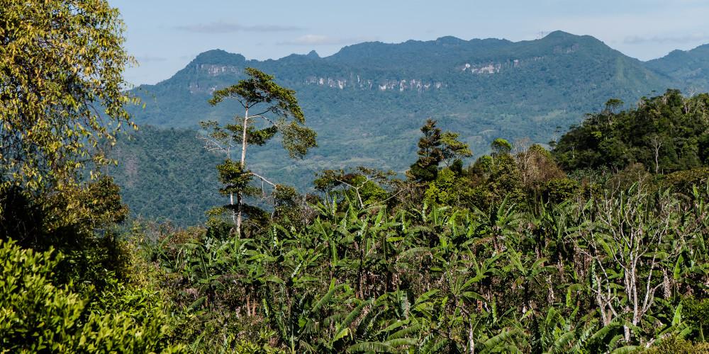 Природный заповедник Босавас, Северо-запад (Манагуа, Леон, Матагальпа, Хинотега), Никарагуа