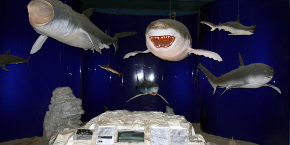 Фото Риека: Музей естественной истории, Истра и Приморье (Риека, Пула, Крк, Паг), Хорватия