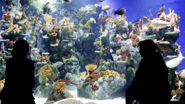 Самый крупный океанариум в Израиле