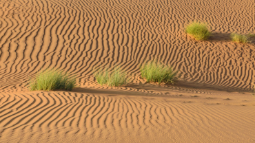 Визы в Оман станут дешевле