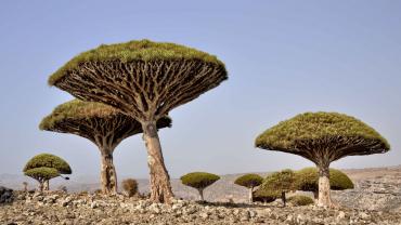 Исследуем Йемен