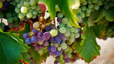Лучшие виноградники во Франции