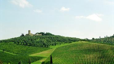 Тур: Винные заводы в Тоскане