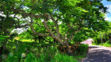 Малоизвестные факты о Бермудских островах