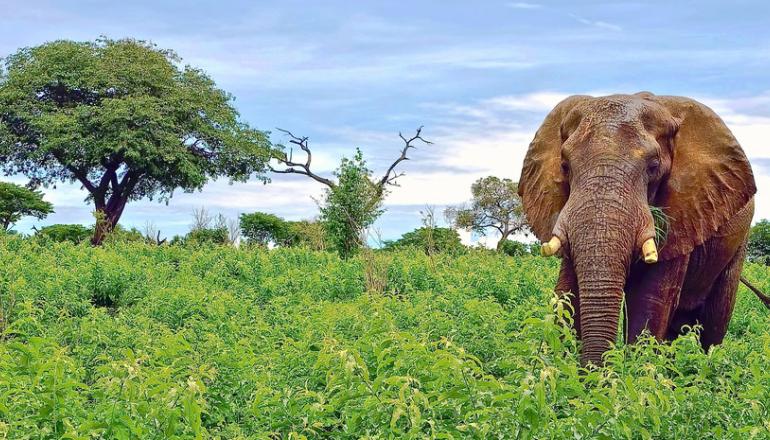 Ботсвана вводит туристический сбор